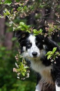 Spiritual Animal Healer Program