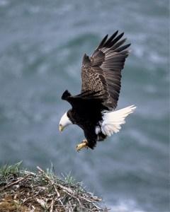 Eagle Empowerment