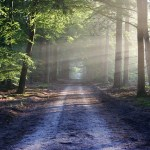 Life Path Empowerment