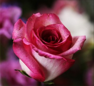 Protective Rose Camouflage Empowerment
