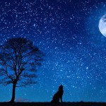 Howl of the Wolf Reiki