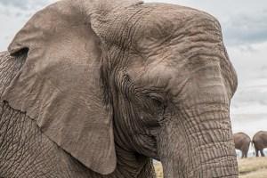 Elephant Medicine Empowerment