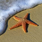 Celestial Golden Starfish