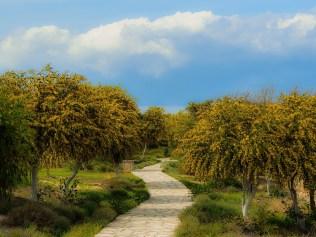 Moving Forward on Your Path Manifestation