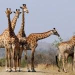 Giraffe Power Animal Empowerment