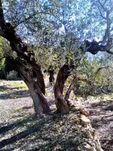Grounding to Gaia Empowerment
