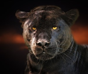 Mystical Black Panther