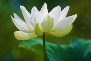 Sacred Source Vibration Empowerment