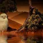 Goddess Athena's White Owl Empowerment