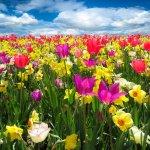 Light of Spring Reiki Empowerment