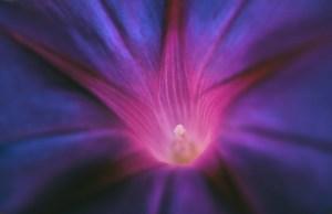 Divine Violet Flame