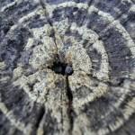 Wheel of Life Manifestation Reiki