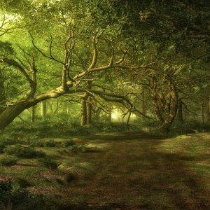 Faery Tree Spirit Energies Attunement