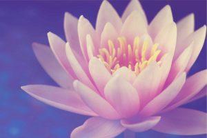 Lotus Flower of Quan Yin Attunement