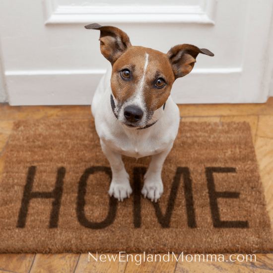 If your dog gets lost, do you know what the steps are to start looking for your dog and bringing him or her home?