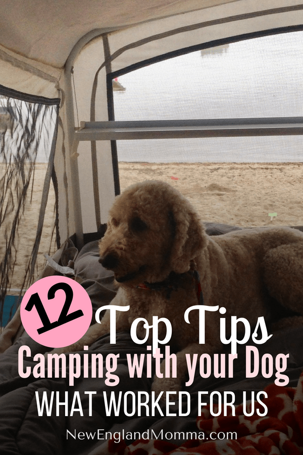 Camping is a great outdoor activity the family can enjoy, even the dog! Here is exactly what you need to know to take your dog camping for the first time. #campingwithyourdog #camping #familycamping