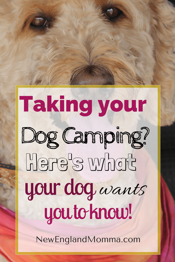 Take your dog camping on your next family adventure. Here is exactly what you need to know before you go!