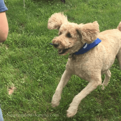 Playing Fetch and 3 other  ways to Play with your Dog
