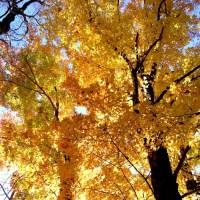 Hoping For a Great Fall Foliage Season