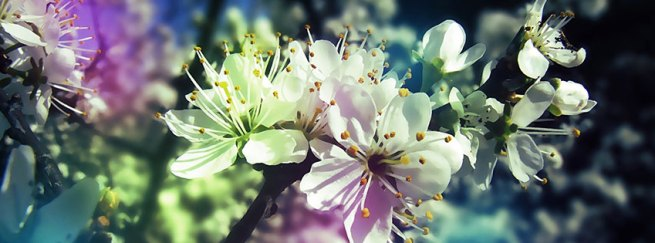 Image result for spring facebook cover photos