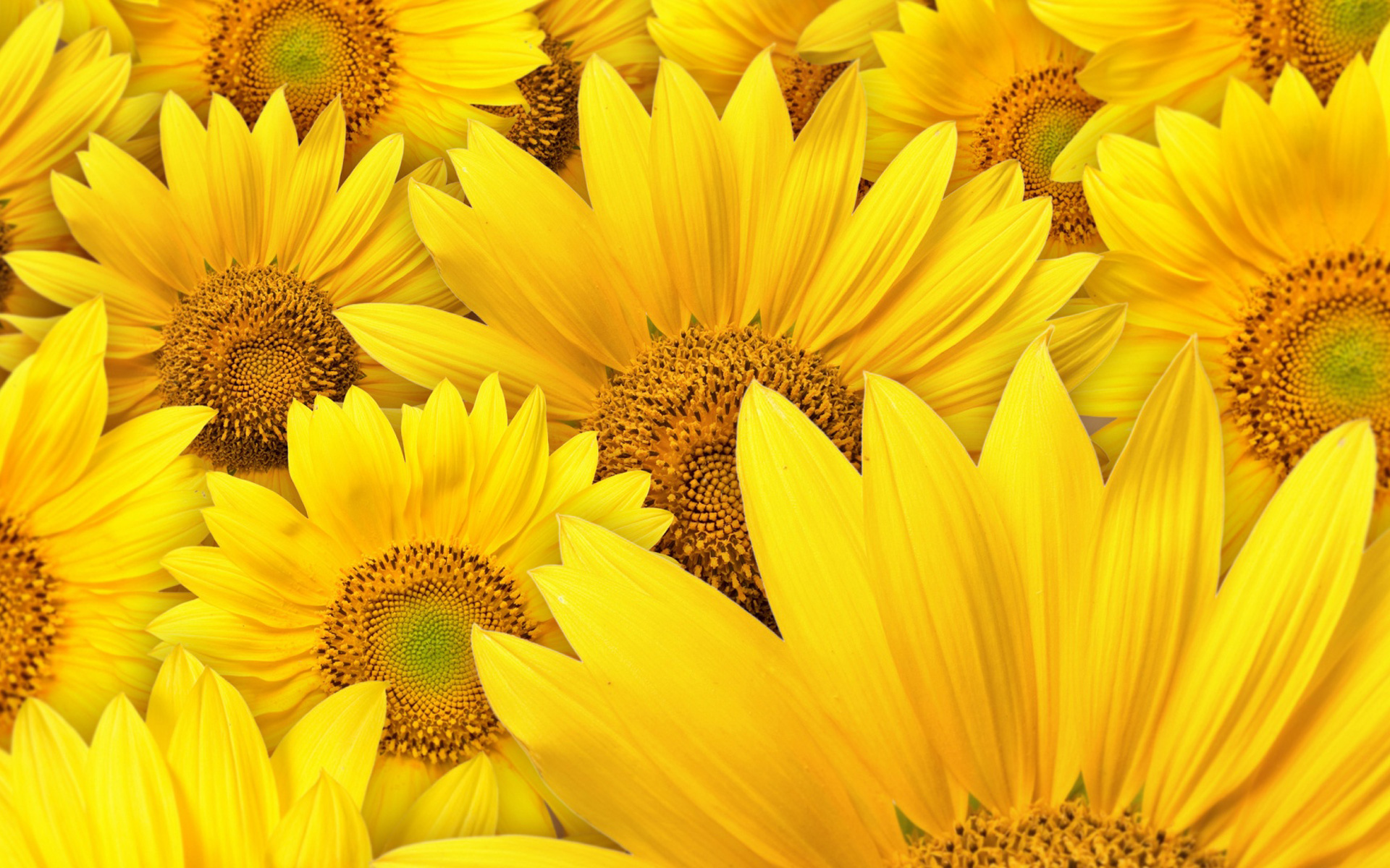 30 HD Yellow Wallpapers Yellow Wallpaper 12