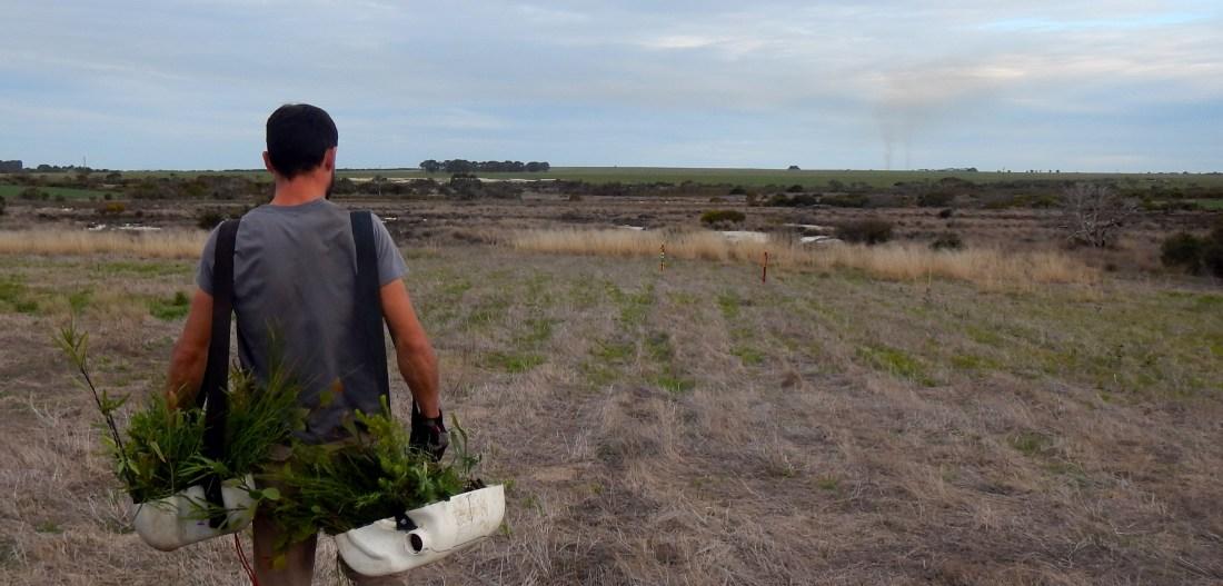 Planter des arbres dans l'outback