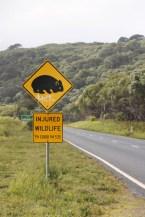 Attention aux wombat dans le Wilson Promontory National Park @neweyes