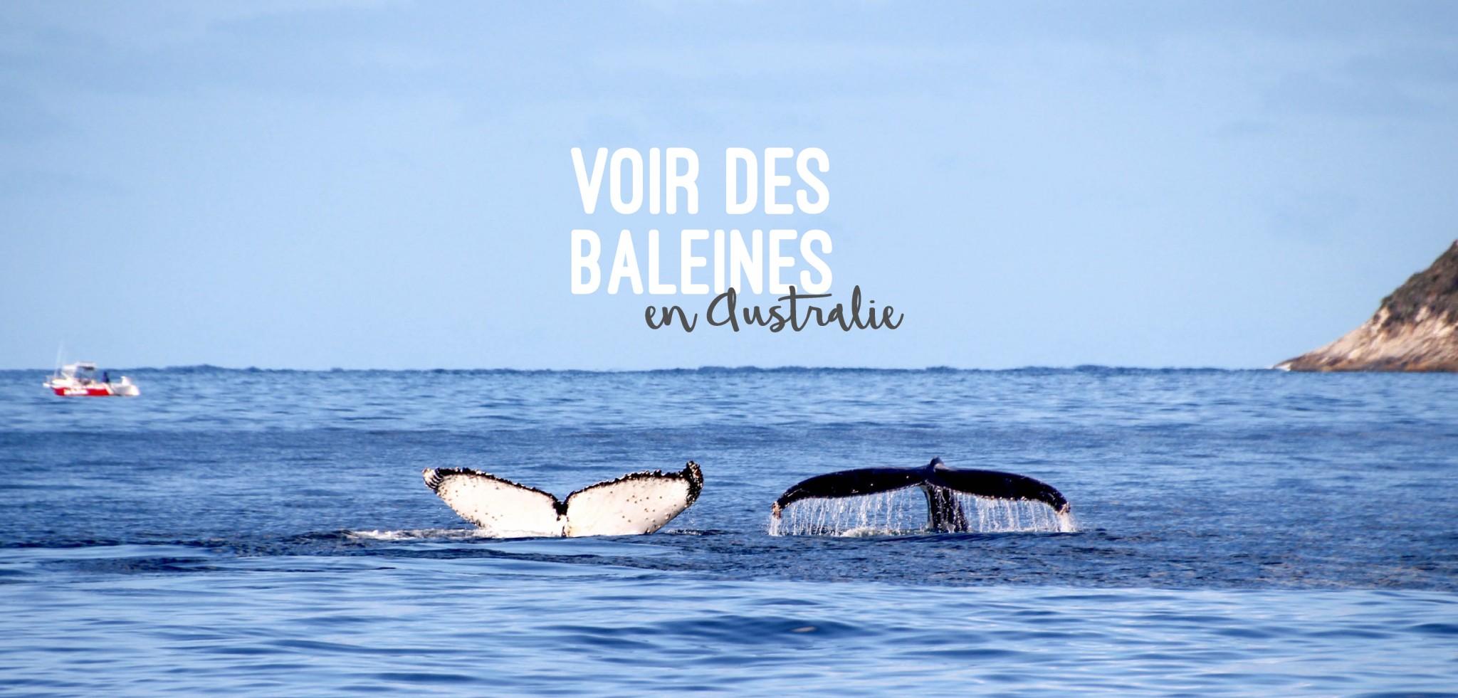 Où voir des baleines en Australie ?