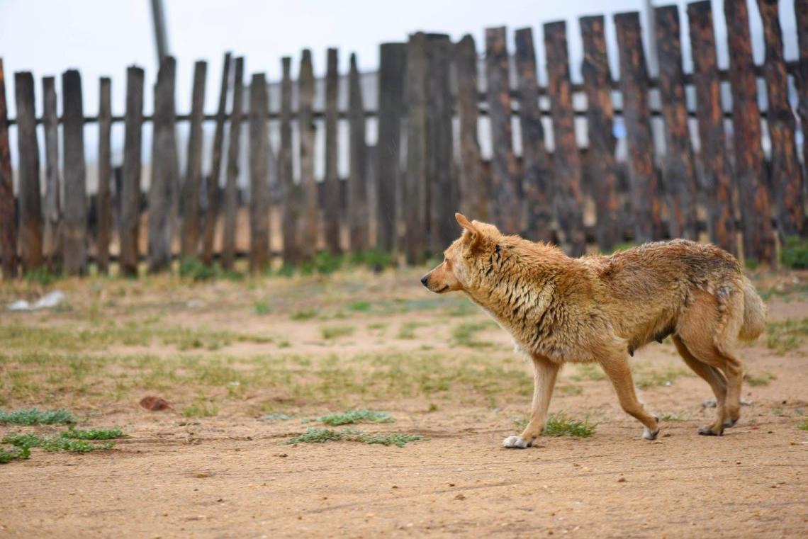 chien errant dans les rues de Khoujir.