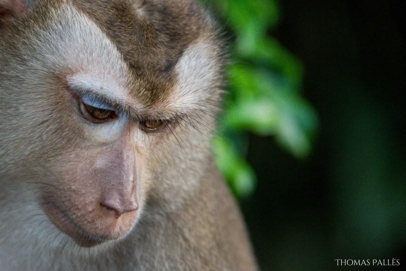 Regard triste d'un singe sauvage à Khai Yai @neweyes
