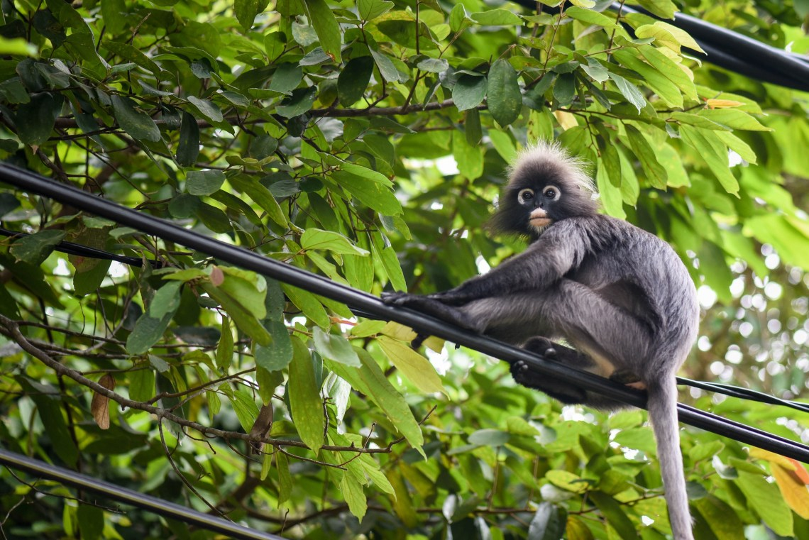 Les animaux sauvages croisés au Parc National de Penang
