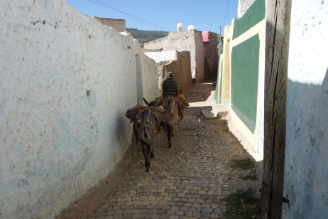 A man walks his donkeys through Harar's winding laneways.
