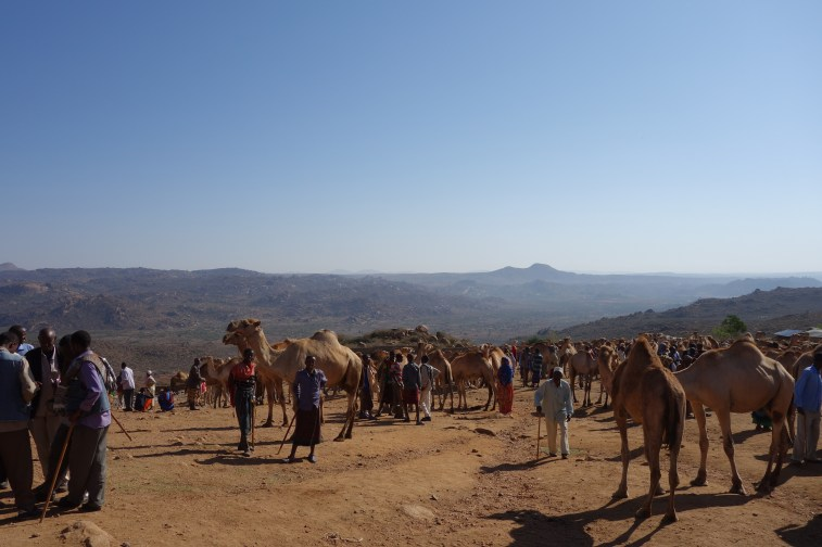 The camel market in Babile.