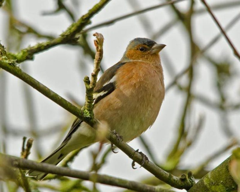 new forest birds