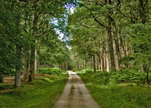 new forest woodland management