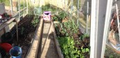 Greenhouse going wild