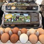 Madelaines Eggs Image