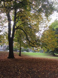 Horse chestnut tree in Endcliffe Park
