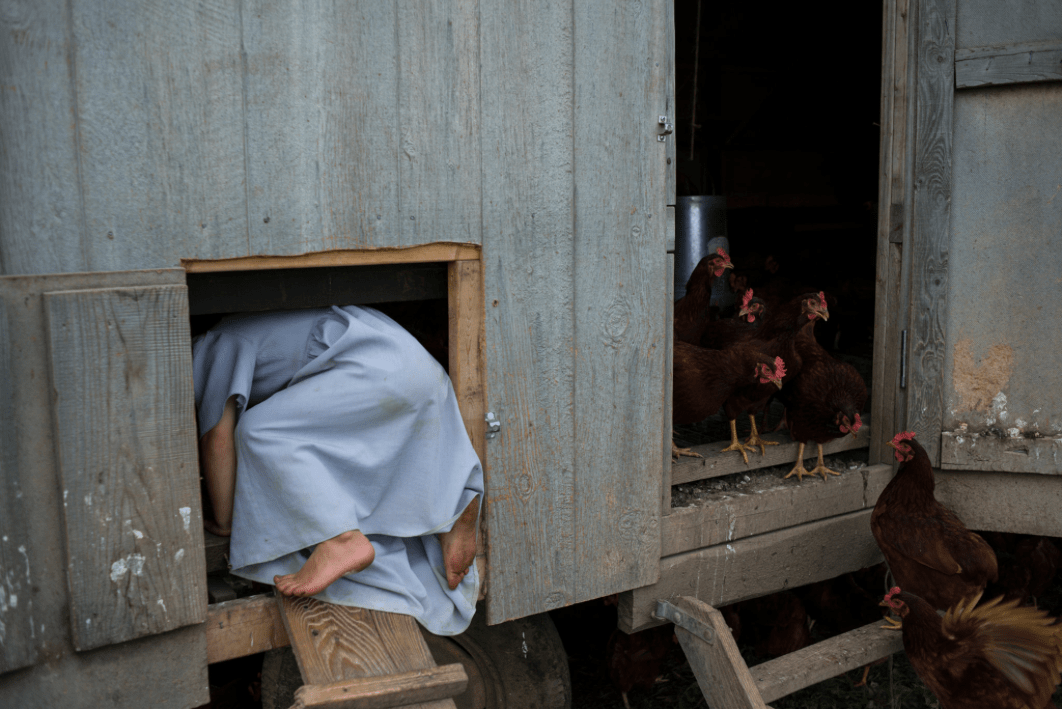 Hosanna Wagler plays with the hens on Goose Green Farm in Madison County, New York. Hosanna's father, Mervin Wagler, founded Goose Green Farm last year when he moved his family here to join the growing Amish community and begin farming. Syracuse University - United States. Credit Alexandra Hootnick