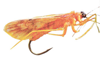 Fishing Fly used by Okatr in Atlas of Creation