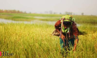Understanding the immediate priorities to empower women in the Indian agriculture sector