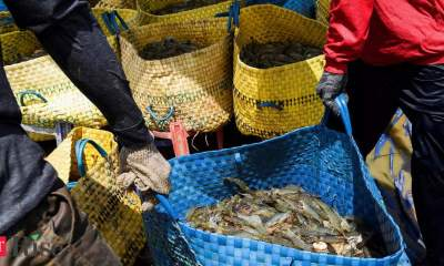 Revenue from export of shrimps likely to increase 20% to $4.3 bn in 2021: Crisil