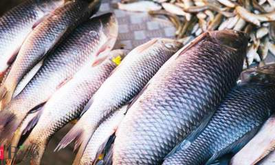 India seeks fair WTO pact on fish subsidies, says limited S&DT inappropriate, unaffordable, unacceptable