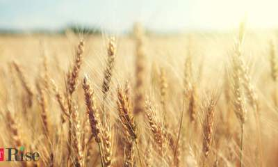 Grains, soybeans tumble as spreading virus fuels demand concerns