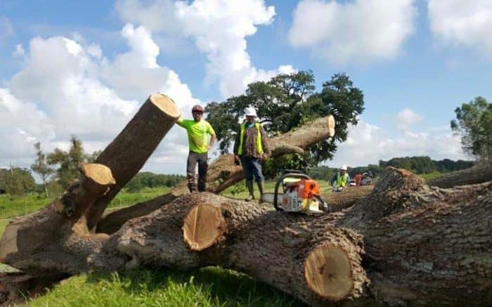New Leaf Arboriculture Arborist and Tree Service - Unorganized 01