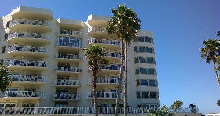 Gulf Shore Dr, Destin, Florida - Washingtonia Palm 01