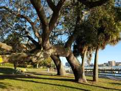 Southern Live Oak-Fort Walton Beach Florida-02