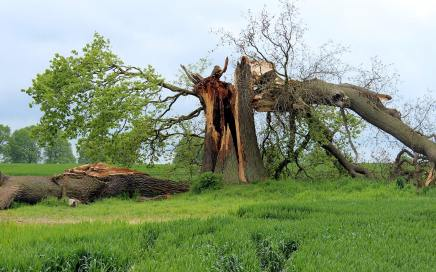 Tree Removal & Cleanup Service - Featured image