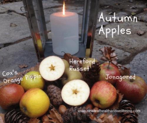 photo of different types of apples