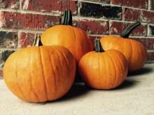 Hey pumpkin!